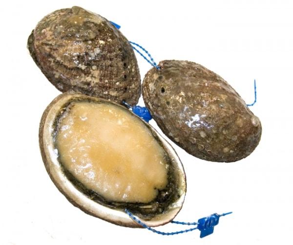 Abalone - Seeohren