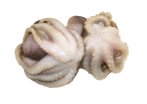 Babyoktopus