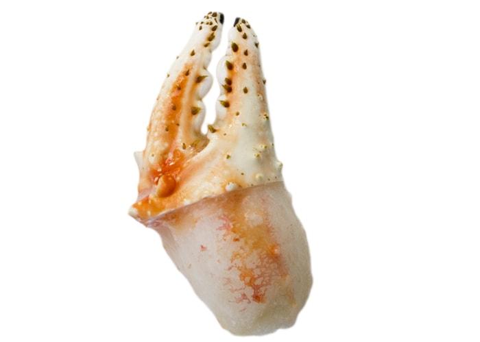 Königskrabbenschere