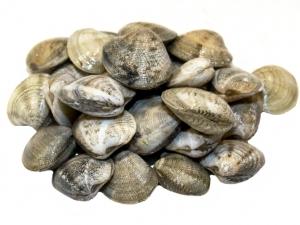 Venusmuscheln - Vongole