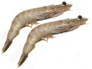 Wild White Shrimps