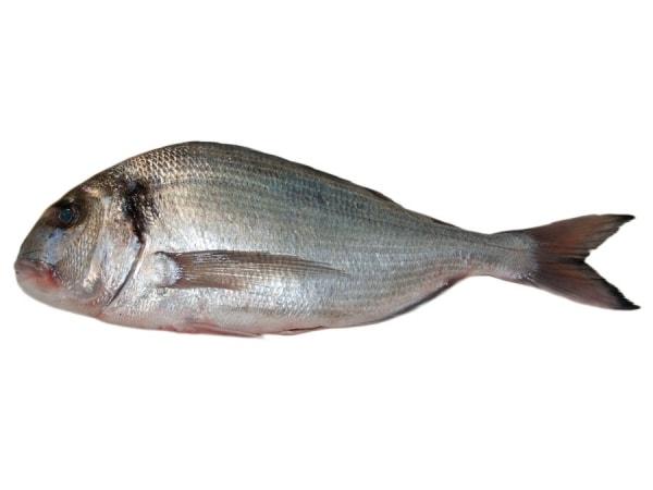 Goldbrasse Wildfang - jetzt bei Fisch-Gruber kaufen
