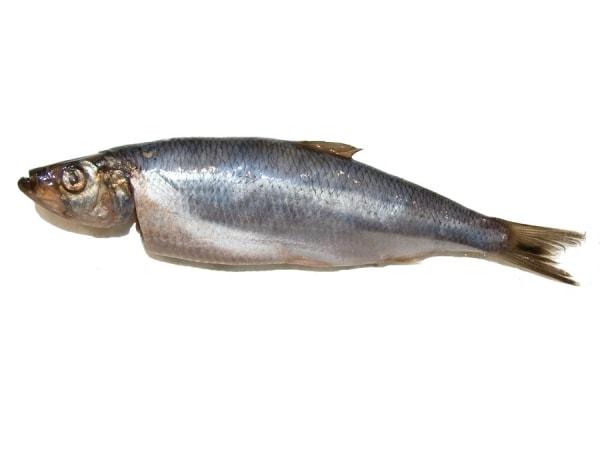 Matjeshering - jetzt bei Fisch-Gruber kaufen