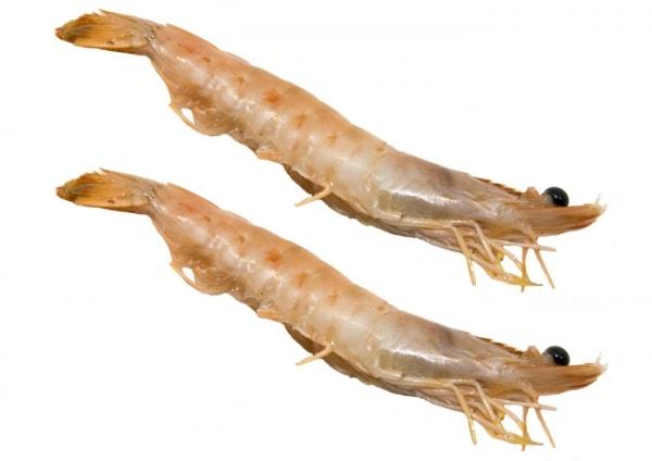 Brasiliensis Shrimps