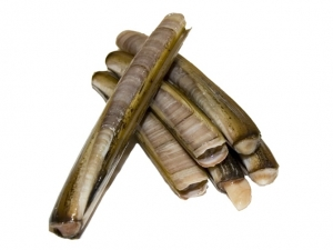 Messermuscheln