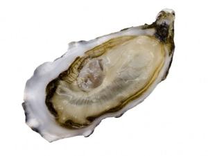 Auster Spéciale Gillardeau