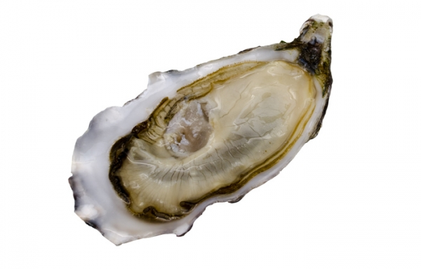 Austern Gillardeau