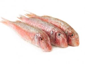 Meerbarbe oder Rotbarbe