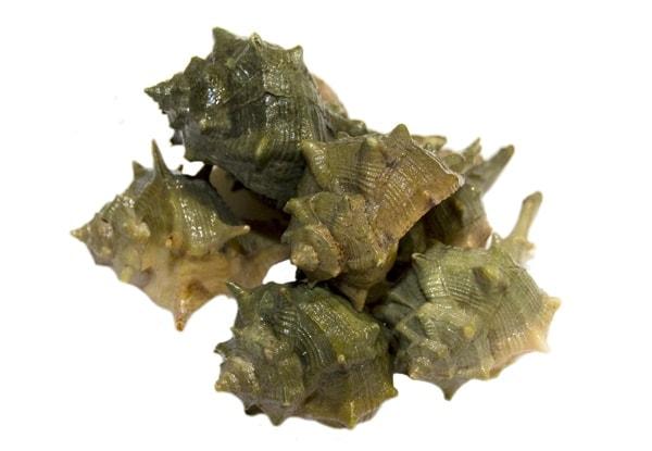 Brandhornschnecken