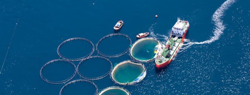 Offshore Farm - Fischzucht draußen am Meer