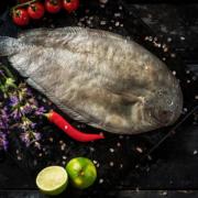 Seezunge - ein edler Speisefisch