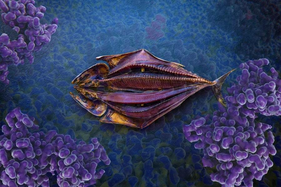 Eine Histaminunverträglichkeit muss Fischgenuss nicht im Wege stehen