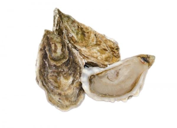 Schottische Austern