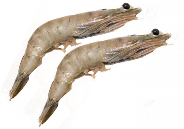 Weiße Garnelen - Wild White Shrimps