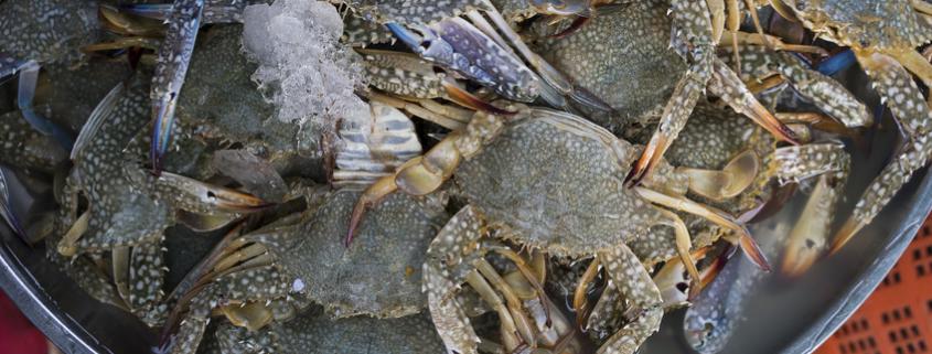 Softshell Crabs oder Butterkrebse: Eine Delikatesse