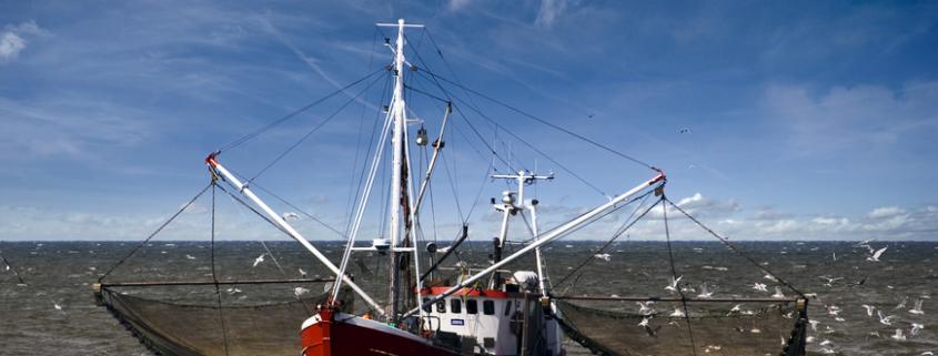 Fisch-Gruber achtet auf Wildfänge von kleinen Fischerbooten