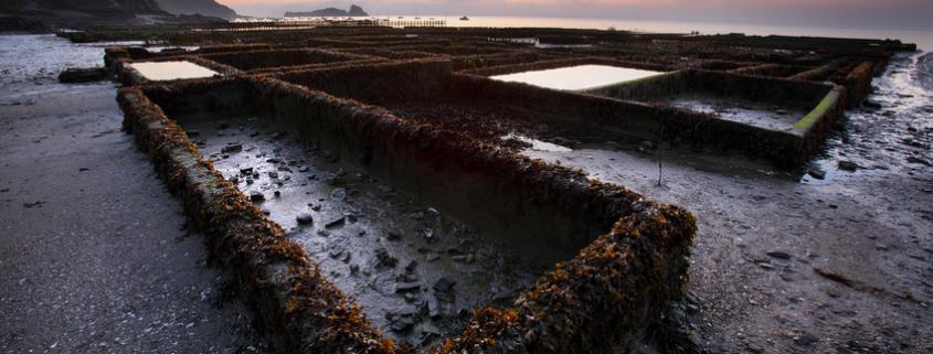 Französische Austernzüchter kämpfen mit Problemen