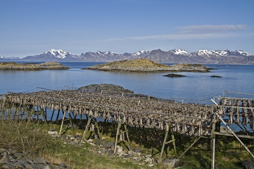 Trockengestelle für Stockfisch - luftgetrockneten Kabeljau