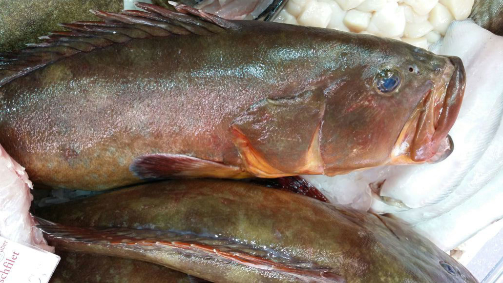 Zackenbarsch in Wildfangqualität bei Fisch-Gruber