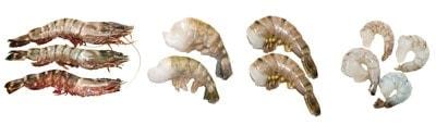 Garnelen in unterschiedlichen Verarbeitungsstufen