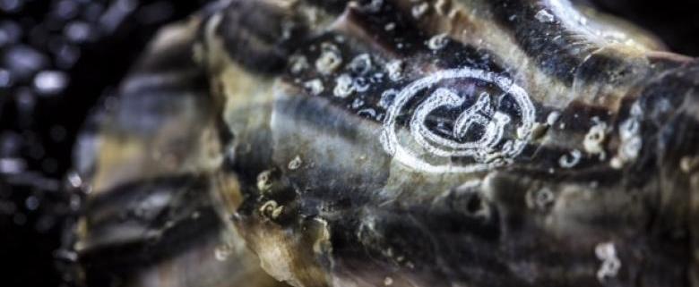 Die Familie Gillardeau graviert ihre Austern zum Schutz vor Fälschungen!