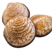 Meermandeln oder Gemeine Samtmuscheln bei Fisch-Gruber am Wiener Naschmarkt