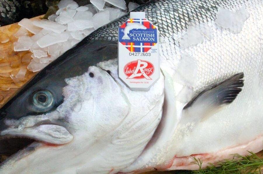 Label Rouge für schottischen Lachs: Ein Qualitätssiegel