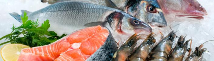 Lagerung, Transport und Hygiene für frischen Fisch - Tipps von Fisch-Gruber