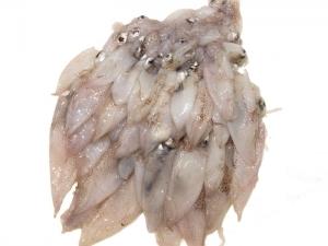 Baby-Calamari